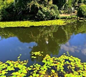 Parks & Pastimes around Woodham Ferrers